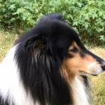 Dougal (Assynt clan)