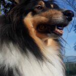 Sasha (Doon clan)
